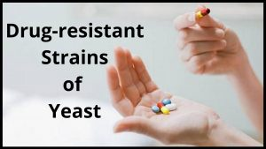 Causes for Chronic Yeast Infections
